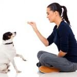 Adiestramiento canino Valencia, Adiestramiento de perros, adiestrador canino valencia