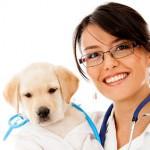 Auxiliar técnico veterinario, Veterinarios Valencia